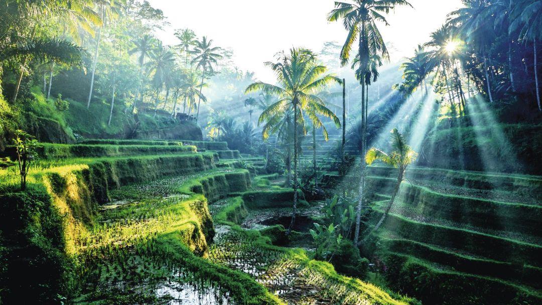 Бали, Ваканция в Бали